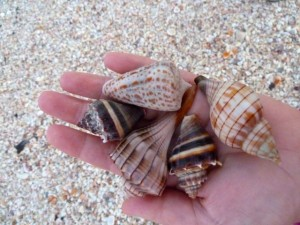 kristy dave seashells sanibel