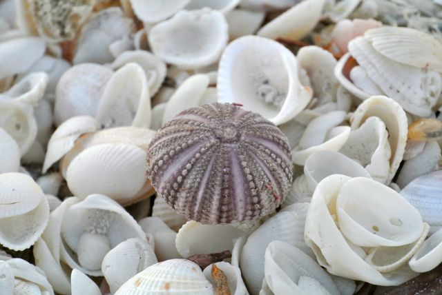 Types of seashells submited images - Types of seashells for kids ...