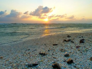 sanibel shells sunset