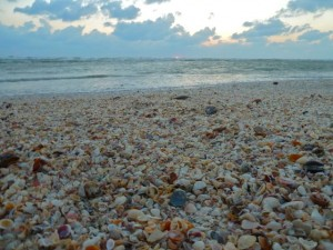 seashells sanibel sunset