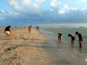 shelling sanibel turner beach