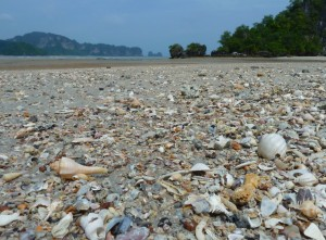 beach seashells Thailand