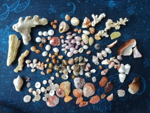 coral island thailand shells
