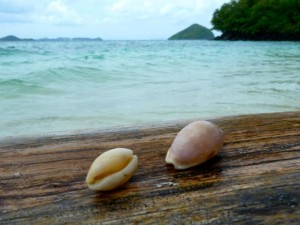 cowries thai