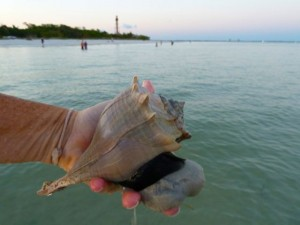 live lightning whelk lighthouse