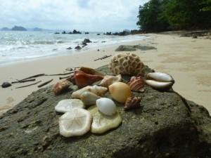 phuket thailand seashells coral