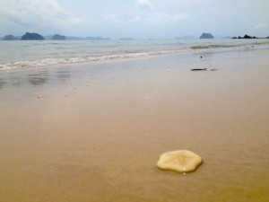 sea cookie krabi thailand