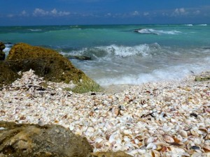 seashell beach southwest florida