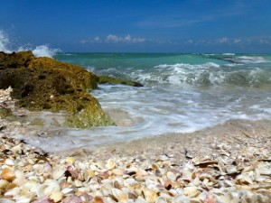 seashells captiva beach