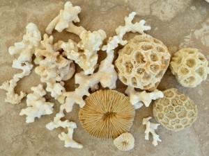 thailand coral phuket krabi