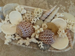thailand seashells coral display