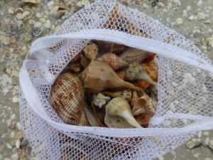 Taylor shell bag