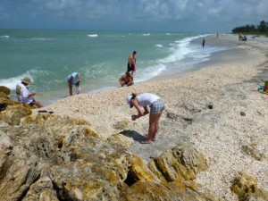 blind pass shell pile captiva