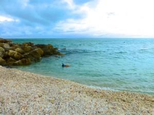 cody snorkel Captiva