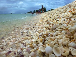 collection seashells
