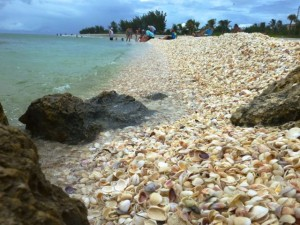 finding seashells swfl