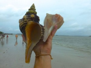 horse conch sanibel ts debby