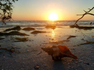 horse conch sunrise