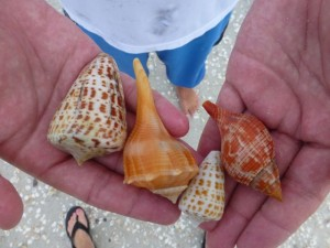 jesse seashells sanibel pier