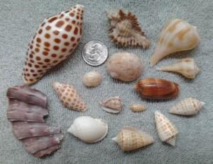 leah sand key shells