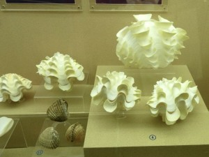 phuket seashell museum clams thailand
