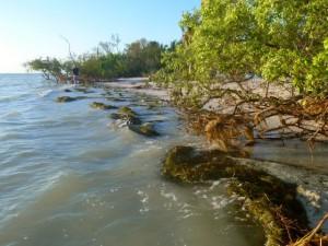 sea grasses storm debby
