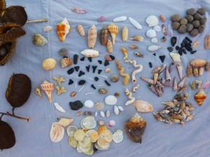 seashells and sharks teeth