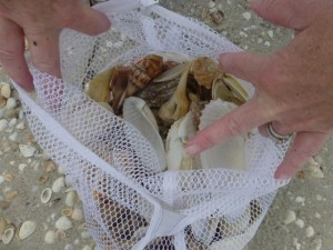 shell bag with angel wings