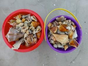 shell buckets