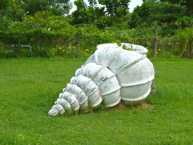 Our Adventures Of Collecting Seashells in Thailand- Part 4 Phuket Shell Museum