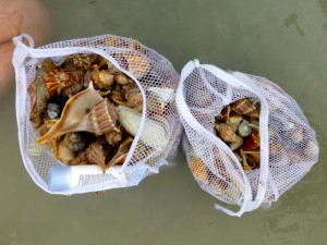 taylor seashell bags