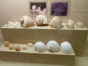 thailand shell museum tun