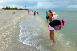 Shelling Blind Pass Sanibel