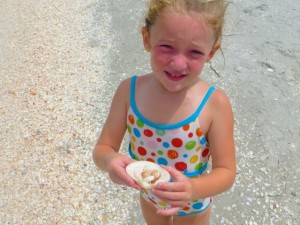 addison seashell beach