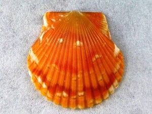 beach bon fire scallop