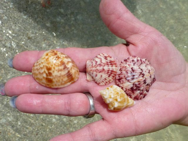 Precious Things Come With Small Shells