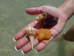 krista seashells