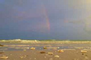 sanibel seashells rainbow