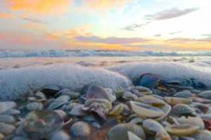 sea foam shells sanibel