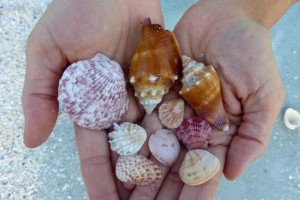 seashells bowmans beach sanibel