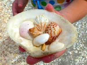 seashells in shell