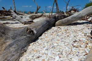 shell pocket cayo costa
