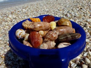 bucket of seashells isaac