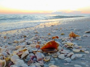conch shell beach