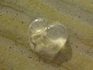 heart jelly fish