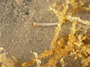 hydrozoa hydroid polyp