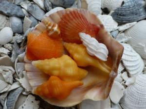 miniature sanibel shells