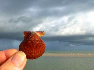 rough scallop storm
