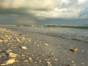 sanibel rainbow seashells