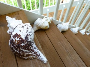 seashell steps